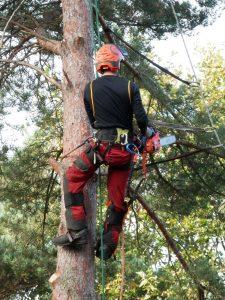elagage arbre Remoulins