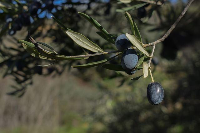 traitement des arbres fruitiers contre les pucerons Beaucaire