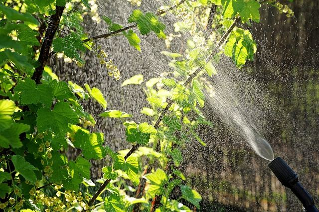 traitement des arbres frutiers Nîmes