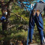 Dessouchage arbres